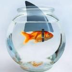 El pez que queria ser más