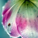 La belleza de la lluvia