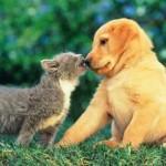 El dilema del perro o el gato: solución