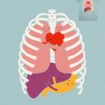 Otra visión de la anatomia