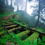 Tren al interior de un bosque